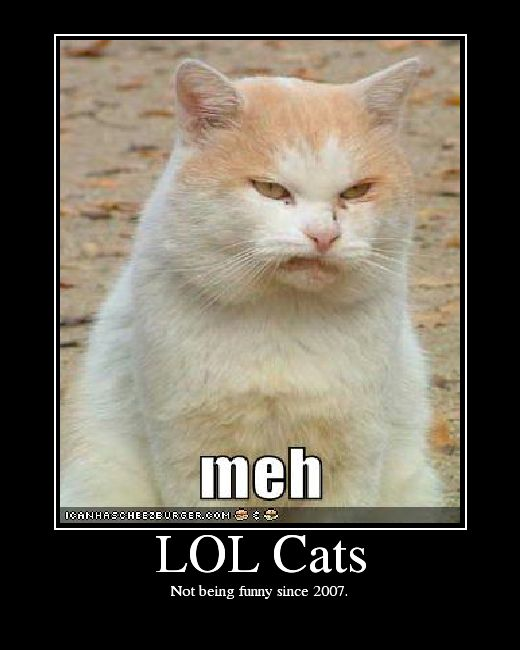 A cat pronounced ˈlɒlk¦t kat is an image bining a photograph of a cat with text intended to contribute humour The text is often idiosyncratic