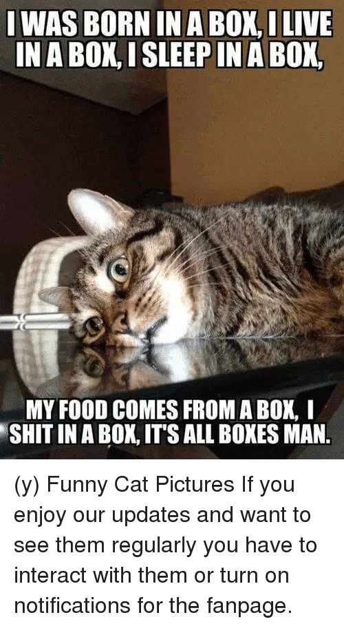 Funny Cat Picture