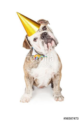 """""""Mexican Hairless Cat and Bulldog Cinco De Mayo"""" Stock photo and royalty free images on Fotolia Pic"""