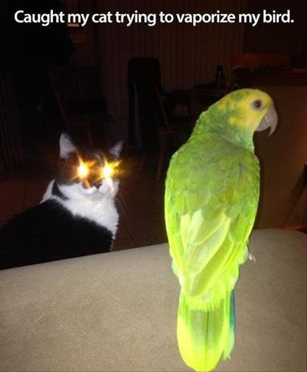 Caught My Trying To Vaporize My Bird Funny Laser Cat Image
