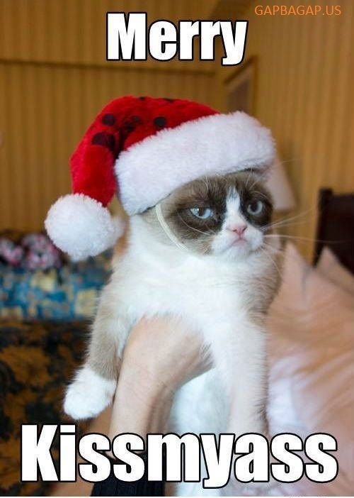 Funny Merry Christmas Meme ft Grumpy Cat