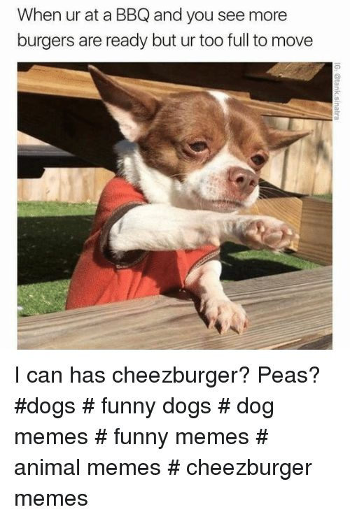 Dogs Funny and Memes When ur at a BBQ and you see more