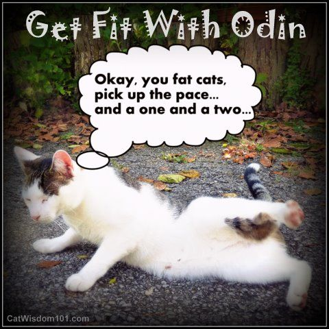 Fat Cats Get Fit with odin funny cat