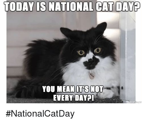 Memes Mean and Meaning TODAY IS NATIONAL CAT DAYB YOU MEAN ITS