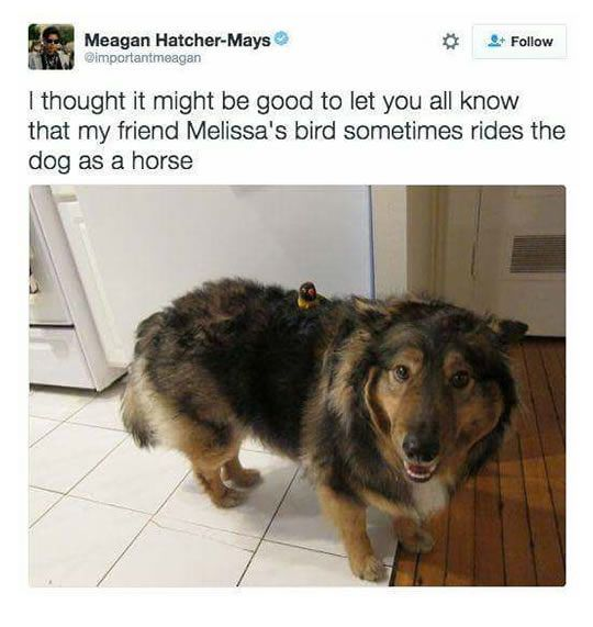 bird riding dog