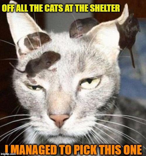 Useless Cat