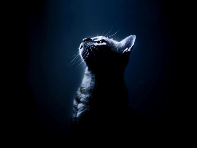Black Cat Wallpaper HD 16 1600 X 1200