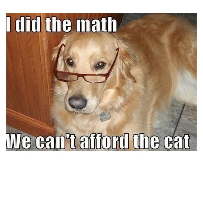 cute funny dog meme 34
