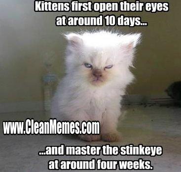 Luxury Clean Cat Memes New Trending Popular Memes Clean Memes the Best the