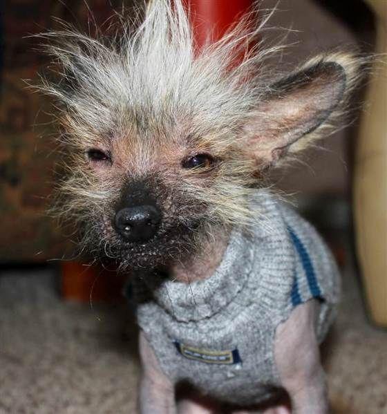 Pick Cute Ugly Dog The Day Dog Dog Dog Pinterest