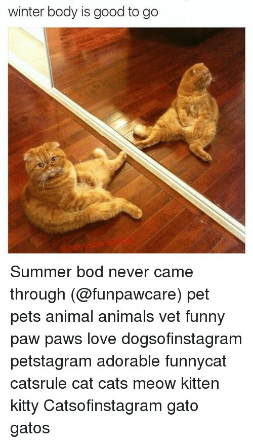 Animals Cats and Funny winter body is good to go Summer bod never