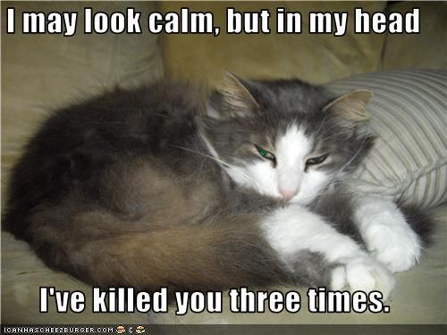 I may look calm but in my head I ve killed you three times is is SO my cat