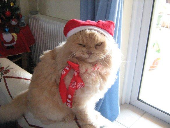 I love Christmas 15 Funny Christmas Cats s
