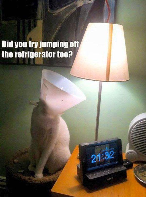 Funny Cat Lamp Refrigerator Jump