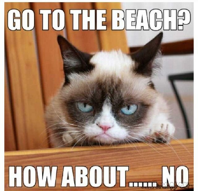 Grumpy Cat Go to the beach How about NO