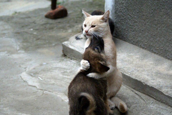 Funny cat hugs dog
