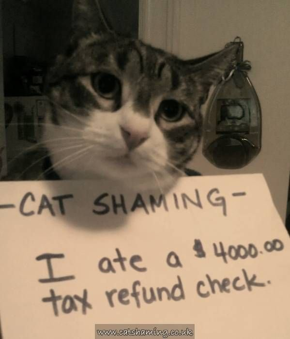 Cat Shaming Everybody Loves a good shaming Hilarious Pinterest