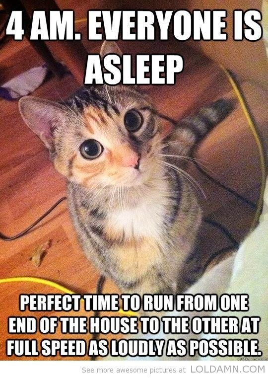 Catch the Unbelievable Funny Cat Sleeps Memes