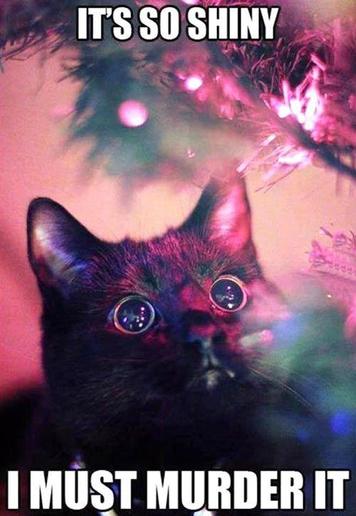 ornament killer cat