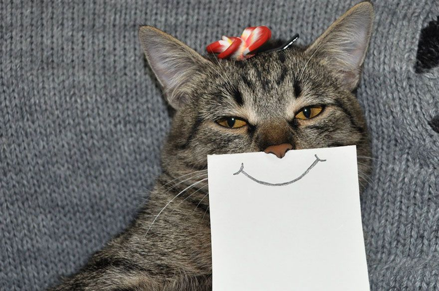 cat paper facial expressions montage 4