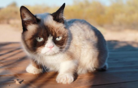 Catch the Unbelievable Funny Memes Abt Grumpy Cat