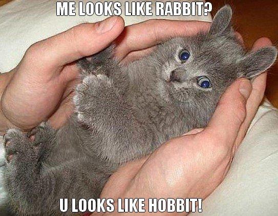 Me Looks Like Rabbit Cat Meme