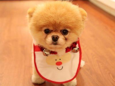 Cute Dog Christmas