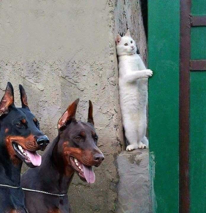 Chat Bizarre Cat Memes Funny Memes Funny Videos Hilarious Fun Funny