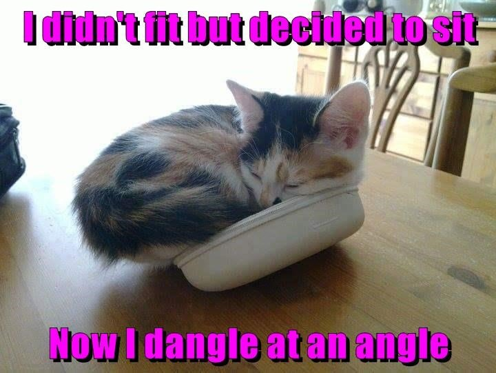fit kitten angle dangle didnt sit caption decided