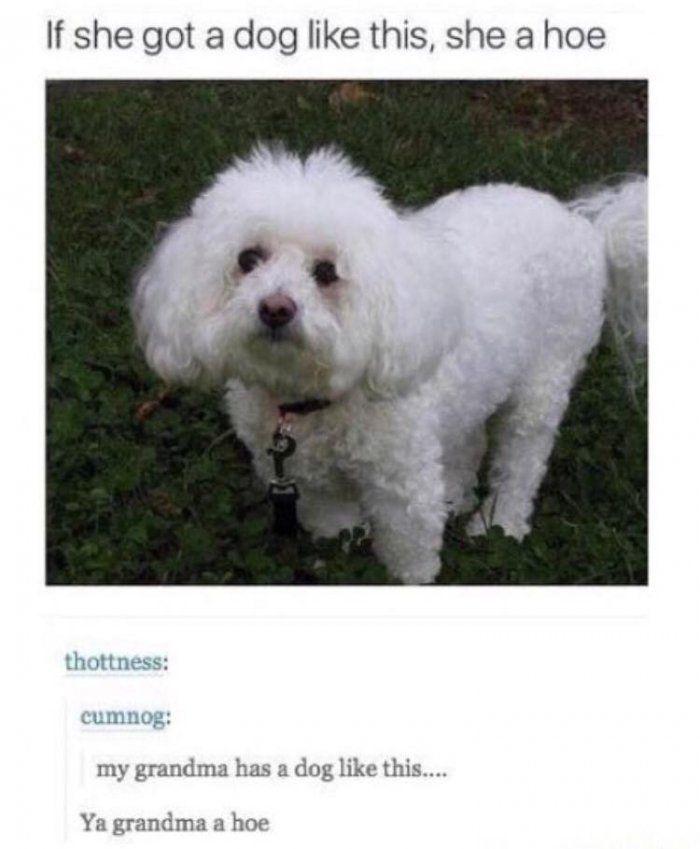 If she got a dog like this she a hoe – dog meme