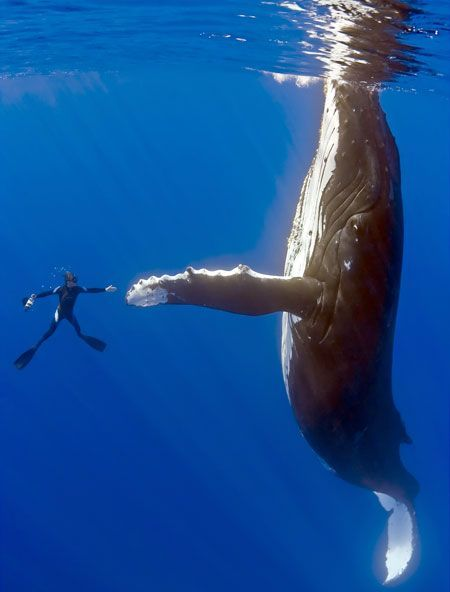 6 give a whale a high five