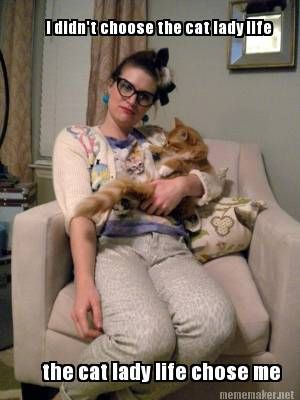 i didnt choose the cat lady life the cat lady life chose me78