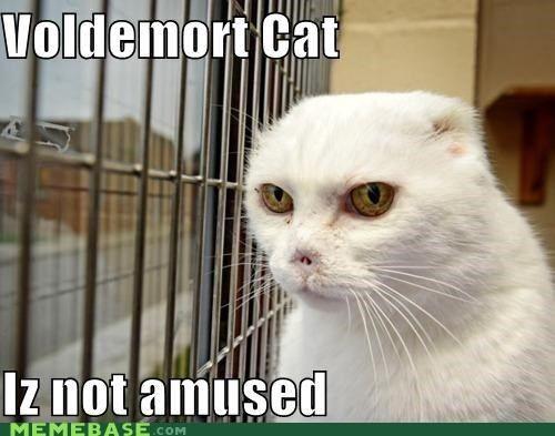 Cats Harry Potter kitten Memes movies nose voldemort