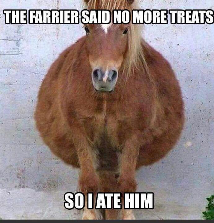 41 Funny Animal to Make You Laugh