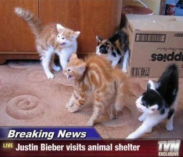Breaking News Cat Memes are so funny These ones are the best