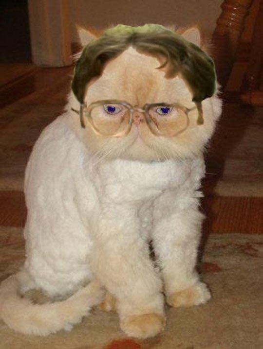 Dwight Cat…