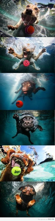 dogs underwater Funny Dogs Funny Animals Cute Animals Funny Puppies Silly Dogs