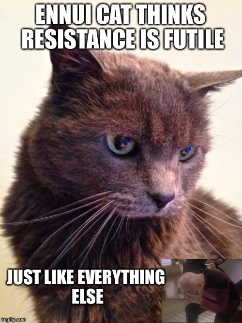 catsmemes funny animal pictures cat memes just like cat funniest animals
