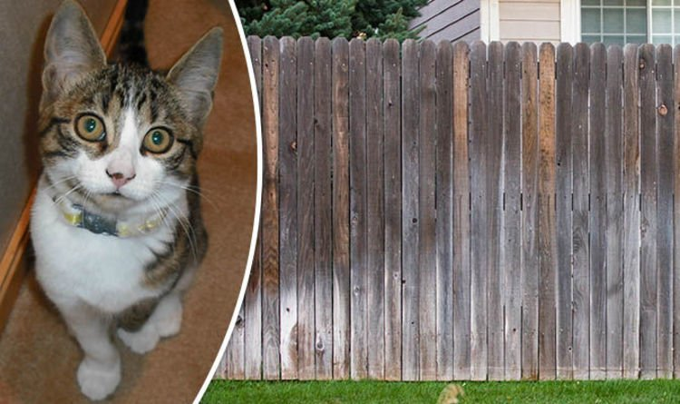 Animal cruelty probe after cat strangled to and thrown over fence Nature News