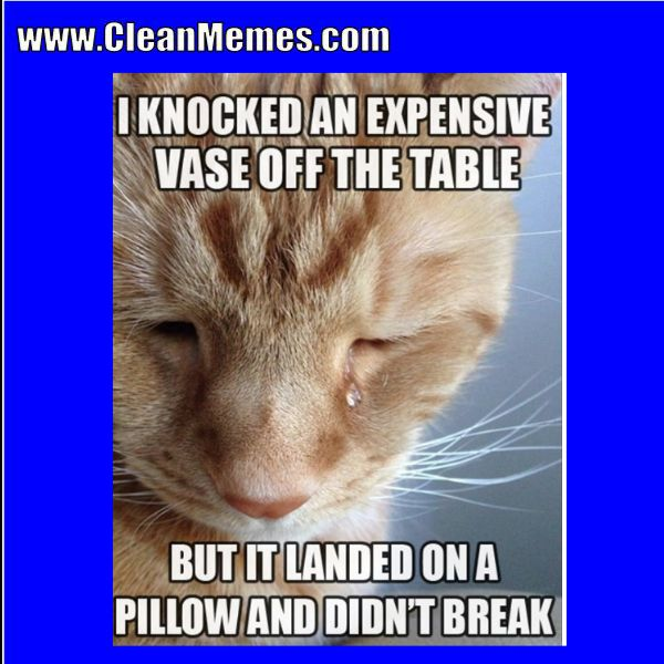 Author cleanmemesPosted on October 10 2018 September 4 2018 Categories Cat Memes Clean Funny Clean MemesTags Cat Memes Clean Funny