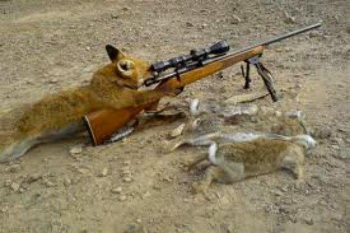 Funny Hunting Hunting Stuff Hunting