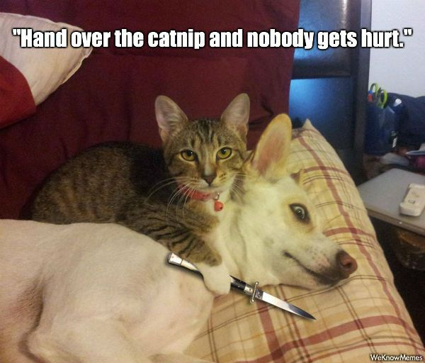 Collect the Awesome Funny Cat and Dog Pictures