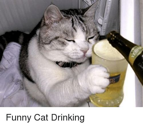 Cats Drinking and Funny mnillusi Funny Cat Drinking