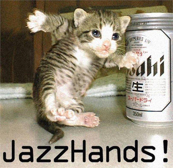jazz handa funny cat 4739