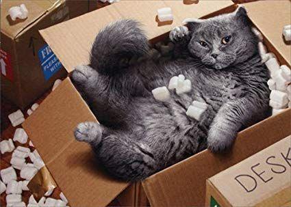 Cat Inside Moving Box Avanti Funny Encouragement Card