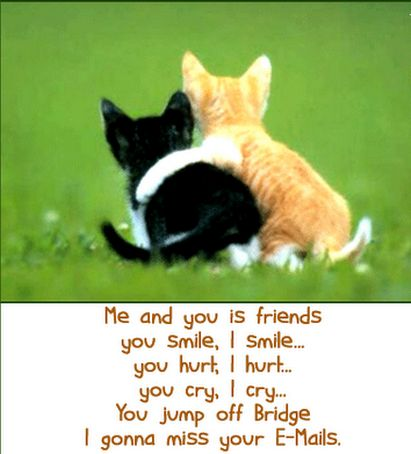 Funny Friendship Quotes and Sayings with Cute Cats for
