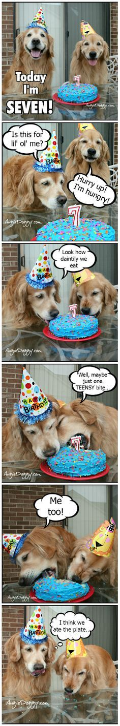 Golden retriever birthday party Happy Birthday Golden Retriever Cute Puppies Cute Dogs