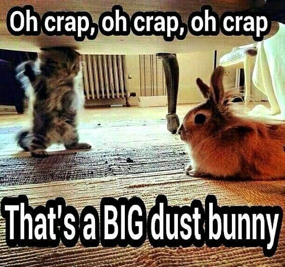Wow That IS a big dust bunny rabbit bunny bunnies Funny s Funniest sCat Memes