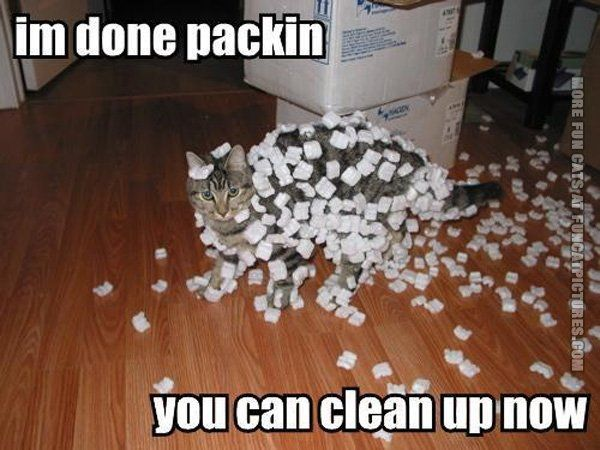 funny cat pics done packing