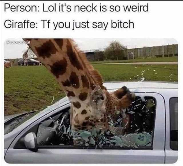 Person Lol its neck is so weird Giraffe f you just say bitch